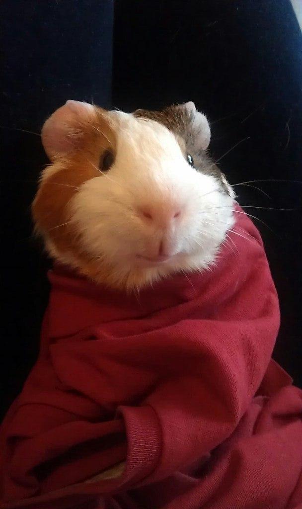 My little pig by Cvet04ek