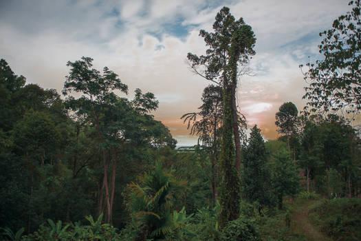 forest, thailand, jungles, Minecraft, sunset