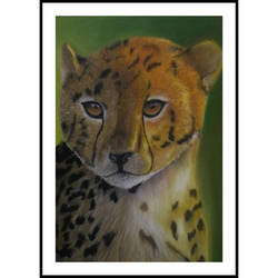 cheetah pastel  by A-M-K-Arts