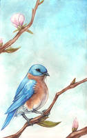 Bluebird by fuzzball288