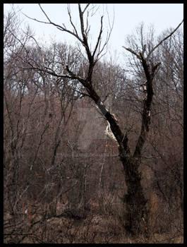 Malificent Tree