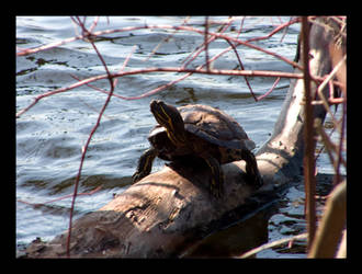 Old Man Turtle by Mogrianne