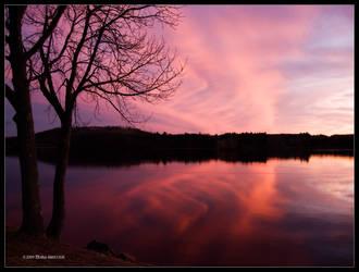 Sunset Rose Violet by Mogrianne