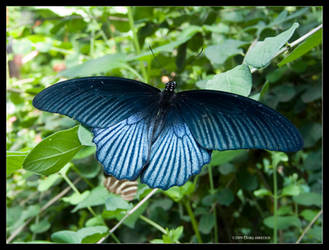Butterfly Cerulean by Mogrianne