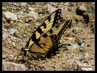 Yellow Tiger on the Sand by Mogrianne