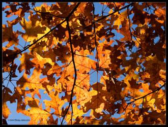 Under Golden Oak Leaves by Mogrianne