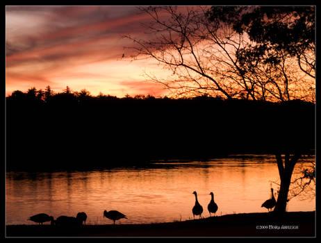 Sunset Companions
