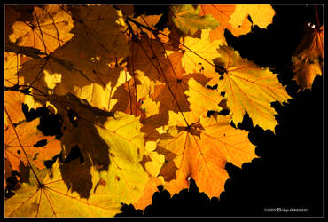Autumn Night Lite by Mogrianne