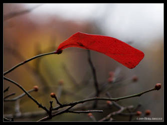 Red Leaf Holding by Mogrianne