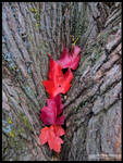 4 of Red Leaves by Mogrianne