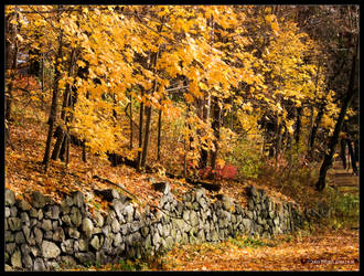Golden Autumn Path by Mogrianne