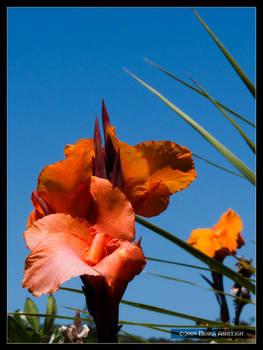 Flowers Grow Tall - Paihia