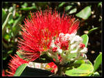 Pohutukawa Too by Mogrianne