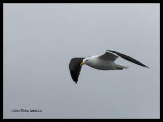 Gull Patrol by Mogrianne