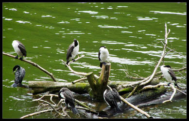 7 of Shags Grooming