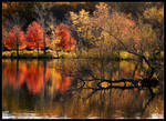 Autumn Patterns Fall