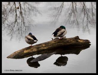 Too Sleeping Ducks by Mogrianne