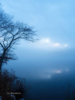Fog Over Ice with Tree