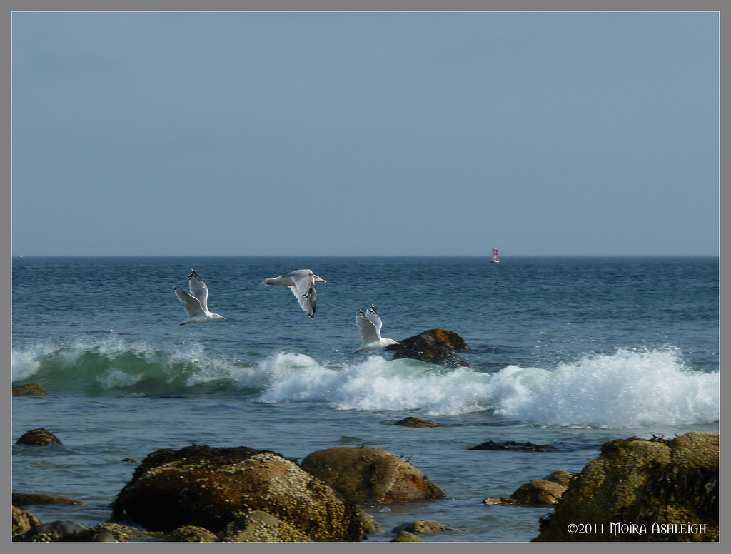 3 Gulls Flying Over Rocks by Mogrianne