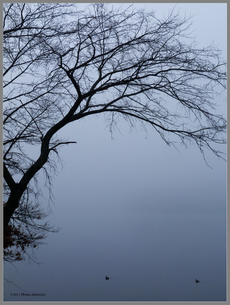 Tree, Fog and 2 Coots by Mogrianne