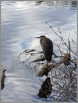 Heron at the Mirror