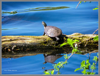 A little turtle by Mogrianne