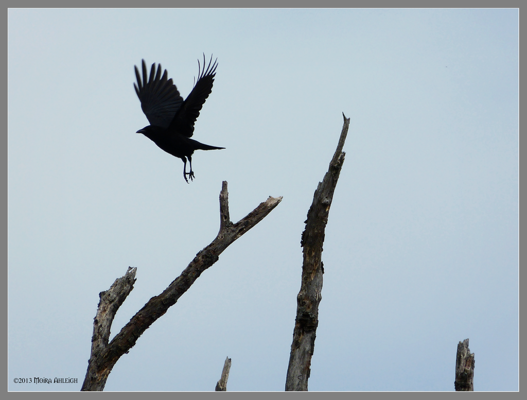 Black bird shaped hole by Mogrianne