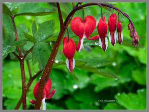 Red hearts on green