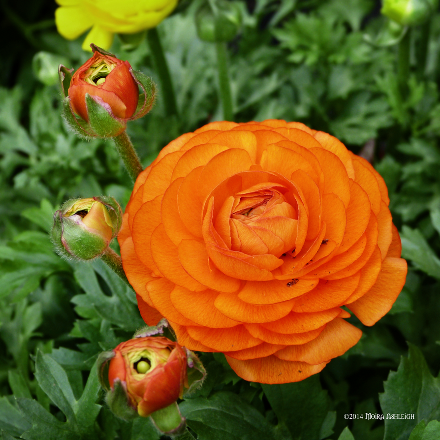 Warm Orange Square by Mogrianne