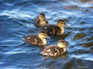 Littles in Blue Water