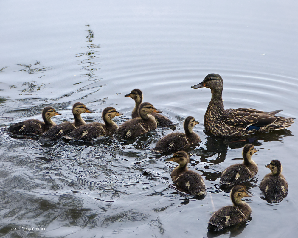 Whole family in the water by Mogrianne