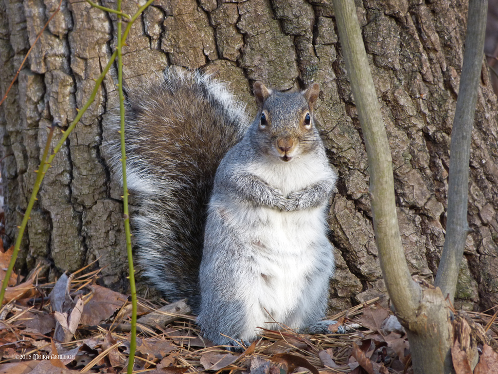 Squirrel early spring by Mogrianne