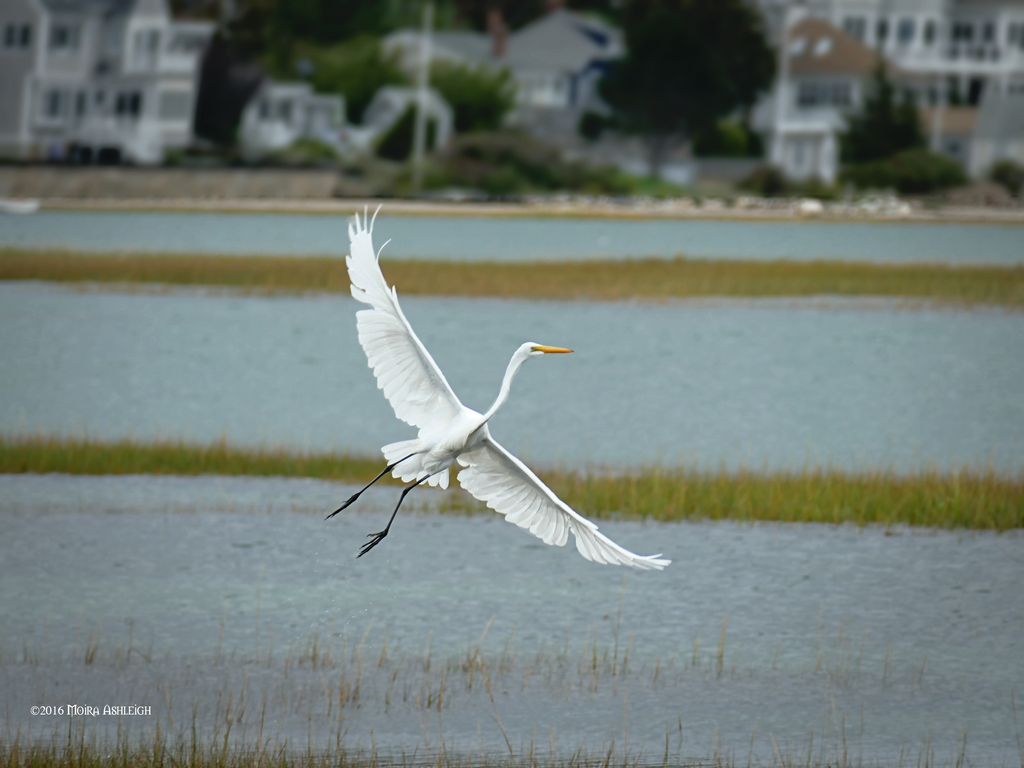 Egret wings by Mogrianne
