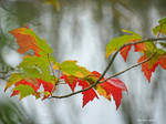 Autumn's Brush