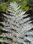 Ghost fern: Intimate Autumn