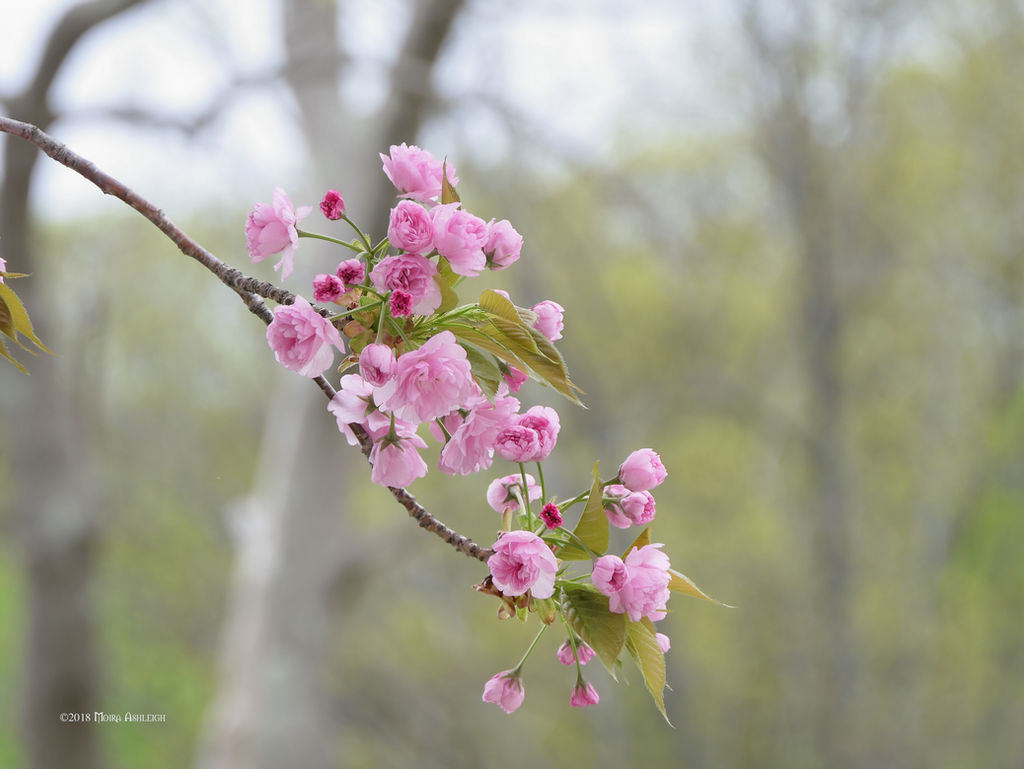 Essence of Spring by Mogrianne
