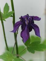 Deep purple flower by Mogrianne