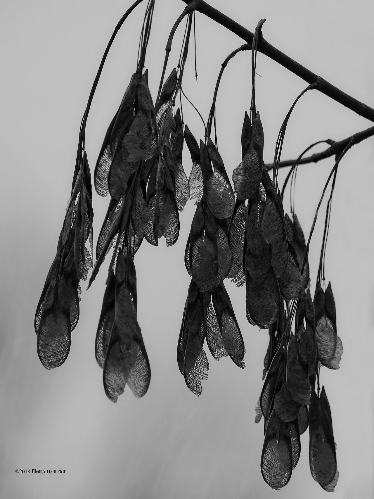 Seeds in darkness by Mogrianne