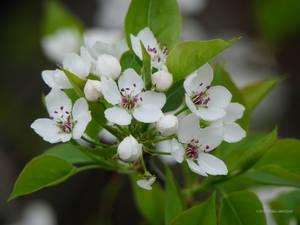 Treeflowers White