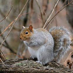 You got a peanut for me?