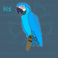 Kal The Macaw