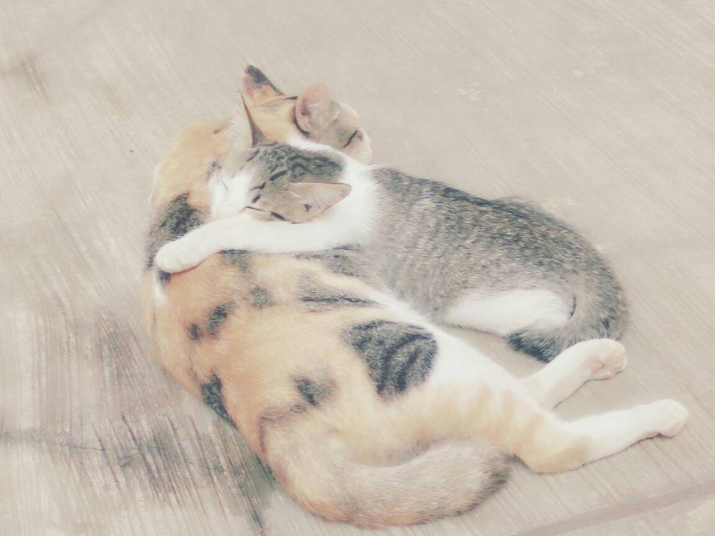 Sleepy Kitten by M-ArUltimate