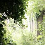 Fairytale Backyard by thedaydreaminggirl