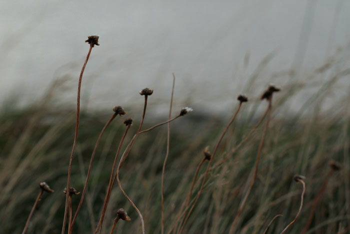 Wild flowers by the sea by thedaydreaminggirl