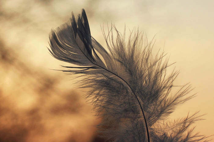 Feather in the wind by thedaydreaminggirl