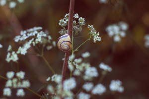 Snail life by thedaydreaminggirl