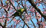 Bird ~