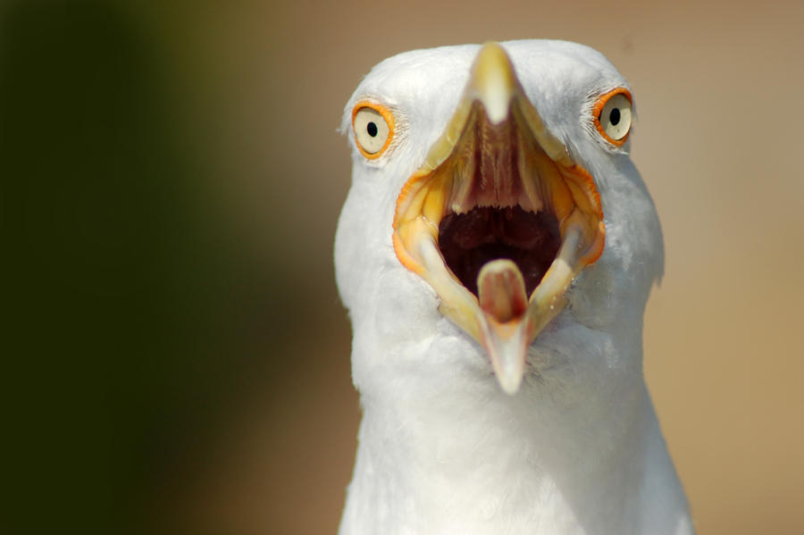 Seagull by Gagalogi