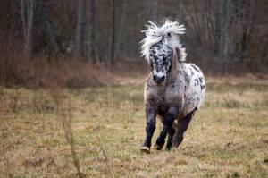 Shetland Pony by Gagalogi