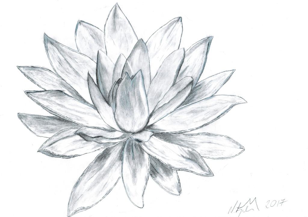Water lily by MateuszNitychoruk